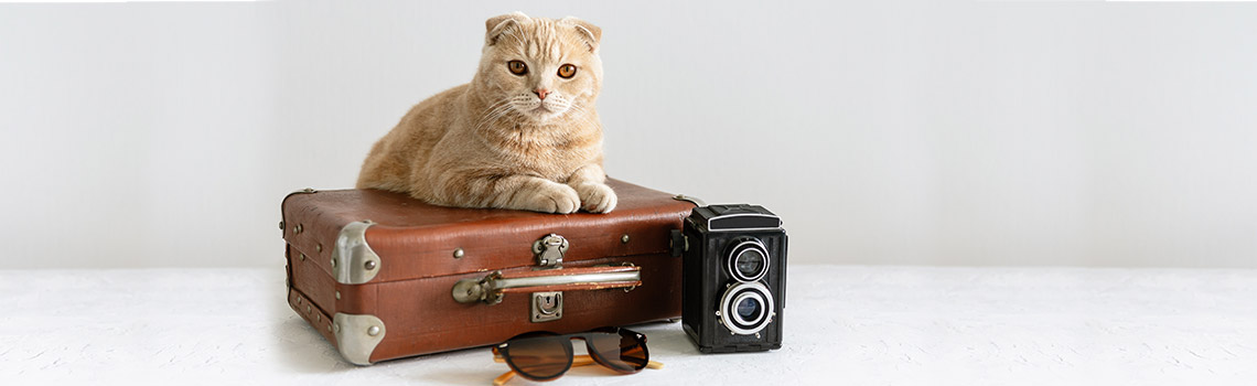 Pet  Travel: What is the difference between cabin, cargo and baggage  travel