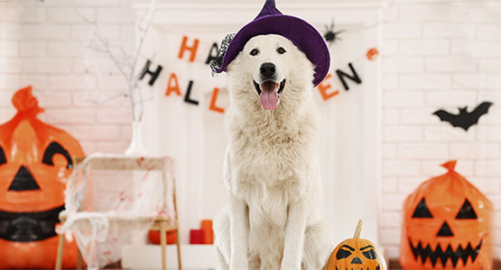 Halloween: Safety Tips for Pets