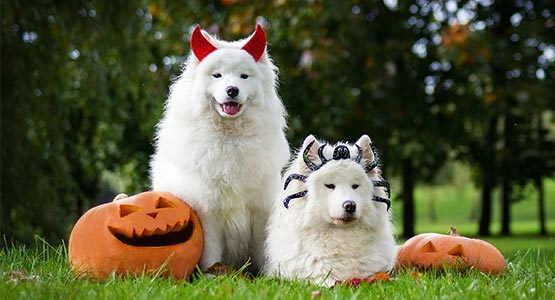 Best Places to be with your pet for Halloween